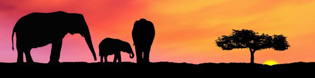 elephants-1338875_1920