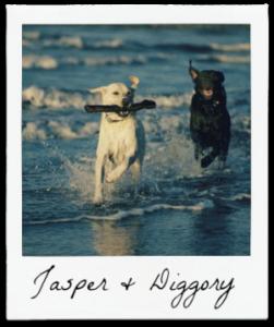 jasper and diggory
