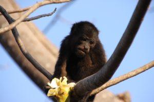 monkey-624797_1920