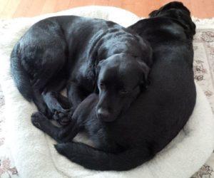 Zuzu Interviews: Kate James' dogs Harley & Logan (plus a Giveaway!)