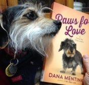 Zuzu Interviews: Dana Mentink's dog Junie (plus a Giveaway!)