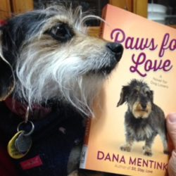 Zuzu Interviews: Dana Mentink's dog Junie (plus a Giveaway!)